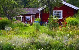 Ilmastonmuutosta voi ehkäistä omalla pihallaan suosimalla kasvillisuuden rehevyyttä.