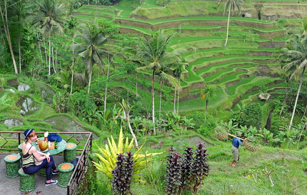 pengerretyt riisiviljelmät