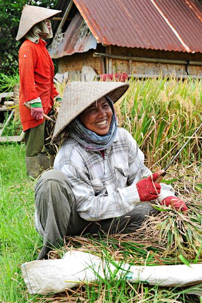 Riisin viljely