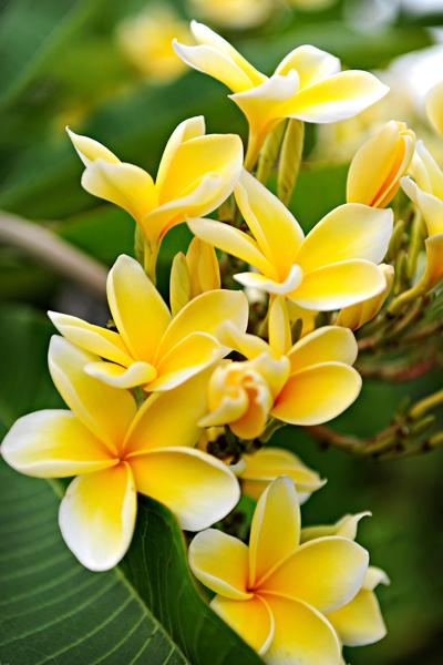 Kukat tuoksuvat kaikkialla