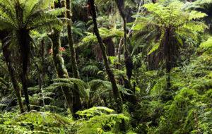Haitin metsät