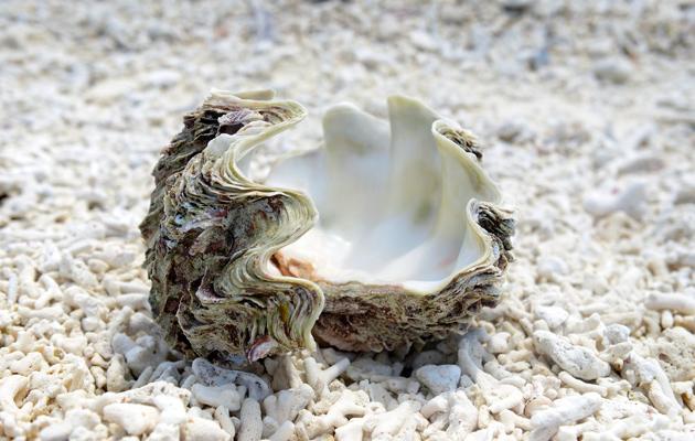Rannoilla ei ole roskia, vaan meren aarteita.