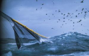 Teollinen kalastus vie linnuilta ravinnon meristä.