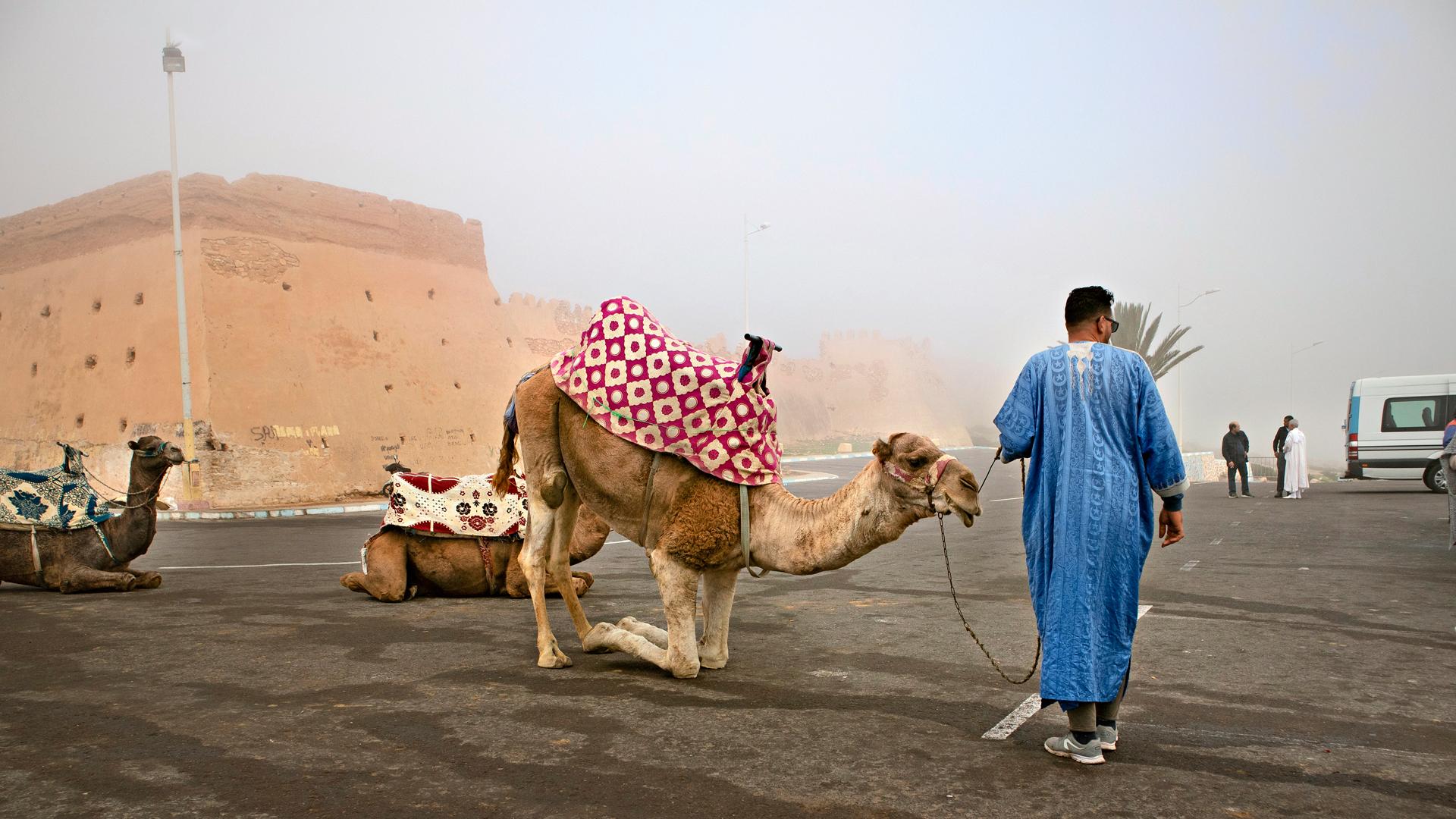 Kashabin kameliajelu