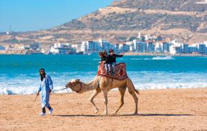 Kameli, aavikon laiva