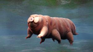 Etelämantereella karhukainen yllätti tutkijat.