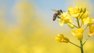 Hyönteiset kuolevat sukupuuttoon kahdeksan kertaa nopeammin kuin nisäkkäät, linnut ja matelijat. Hyönteisten kantaa uhkaavat tehomaanviljely, kaupungistuminen ja ilmastonmuutos.