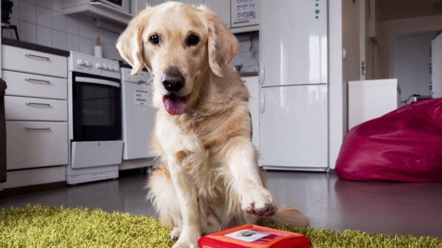 Autistille koira on arjen mainio apukäsi.