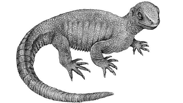 kilpikonnan esi-isä eli Pappochelys rosinae