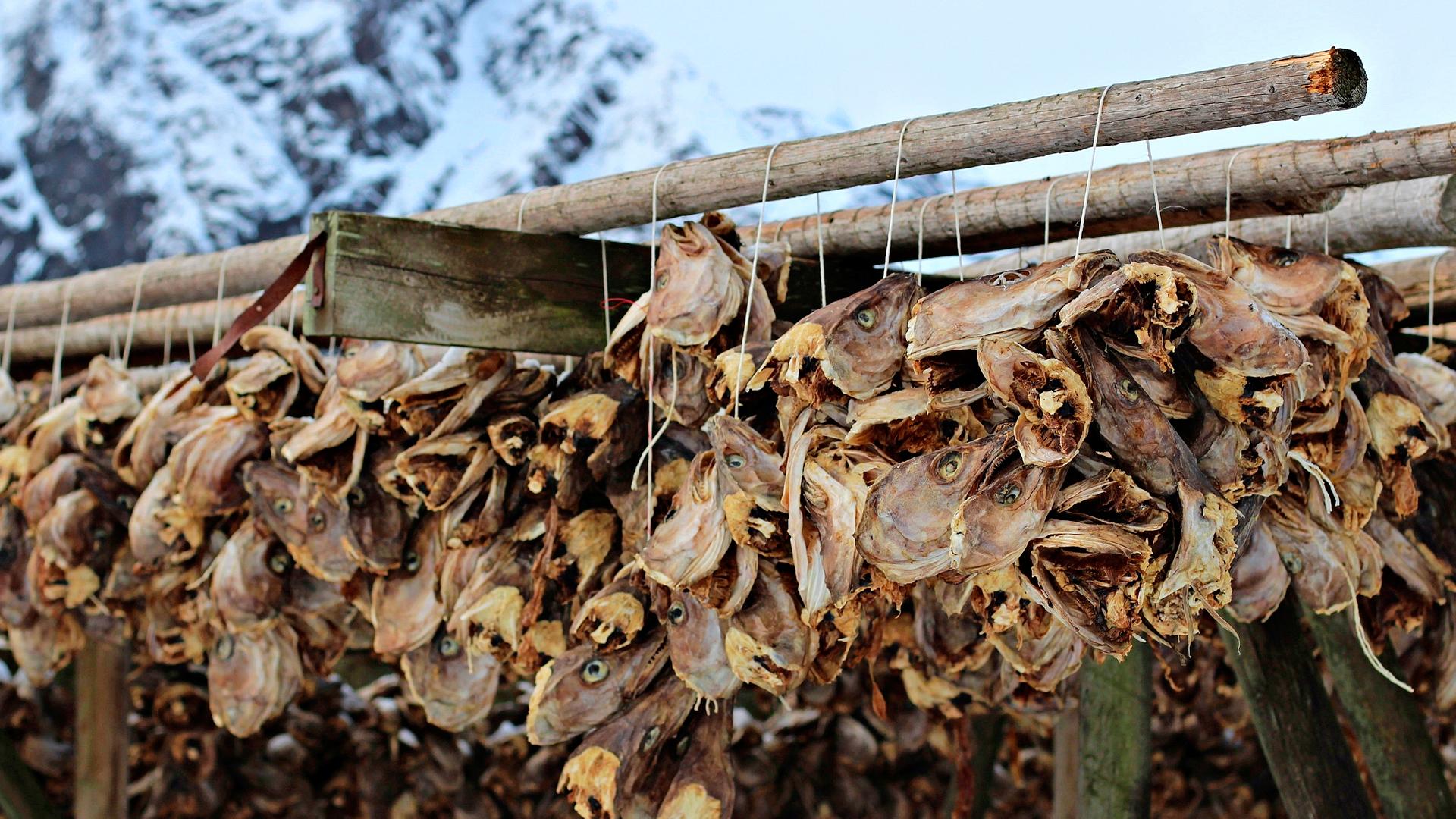 Kapakala on Norjan tärkeimpiä vientituotteita.