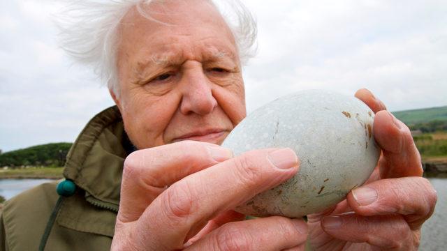 Attenborough ja munan ihme