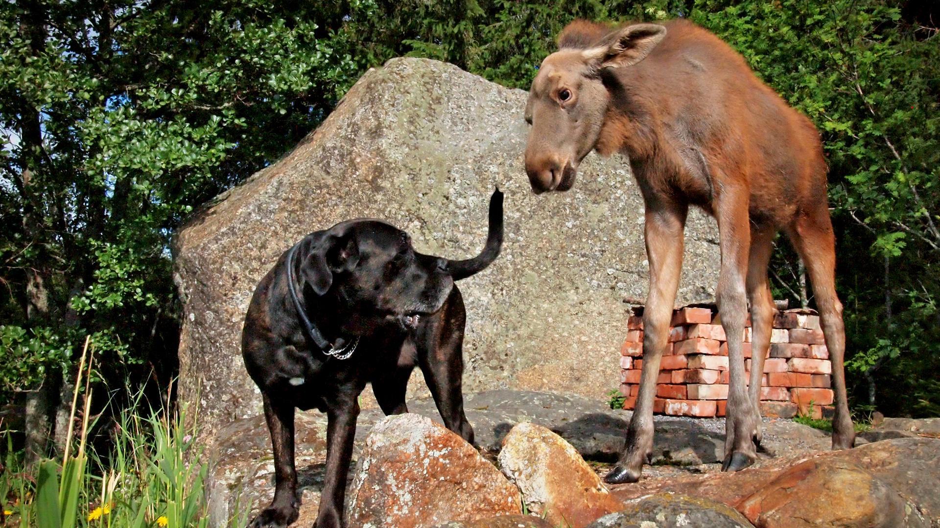 Pikku-Mervi ja koira