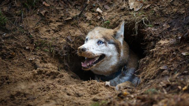 Maanalainen tunneli on viileä lepopaikka koiralle.