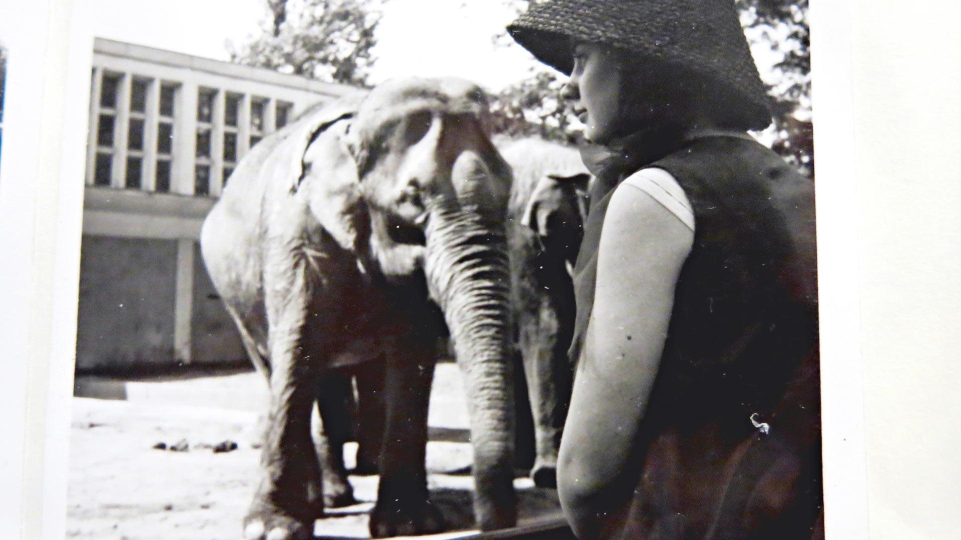 Museot ja eläintarhat