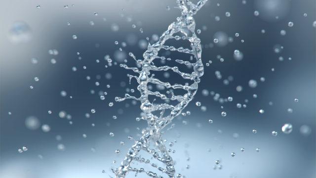 Nuoruuden lähde voi löytyä DNA:sta.