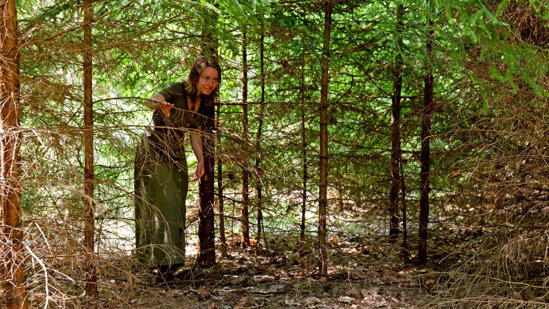 Elisaaren metsä