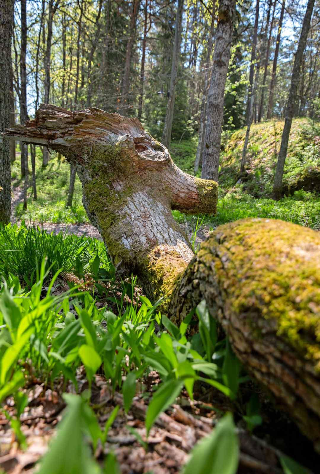Metsän lahopuut