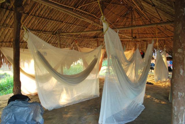 Malariaa levittävät hyttyset liikkuvat öisin.