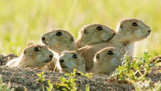 Avara luonto: Oravat lähikuvassa