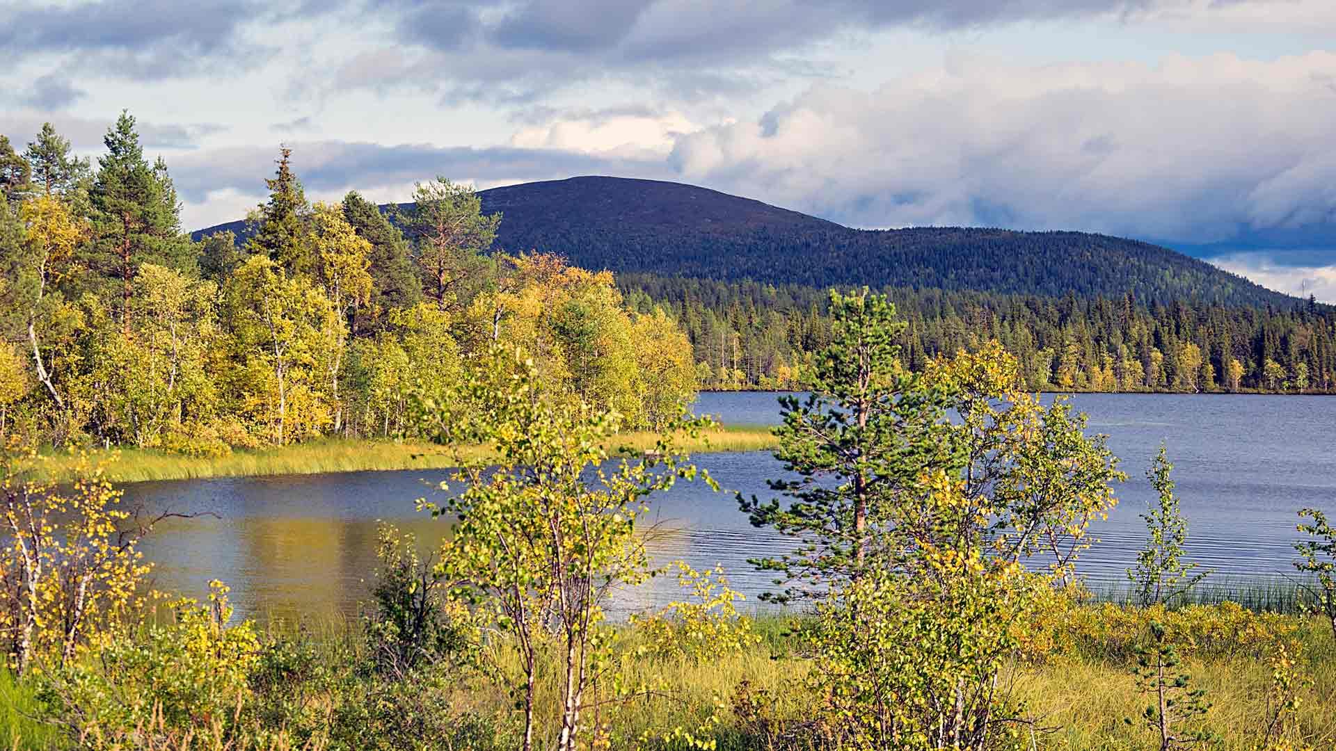 Ruska Pallastunturin kansallispuistossa