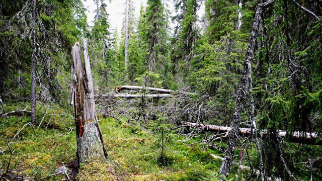 Ystävyyden luonnonsuojelualue perustettiin Suomen ja Venäjän rajalle vuonna 1990.
