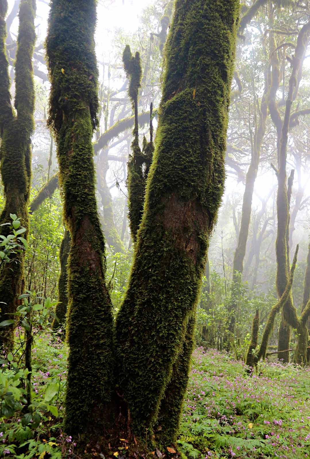 Garajonayn kansallispuistossa laakeripuiden siimeksessä asustaa monia kyyhkylajeja. Niiden siipien läiske saa vaeltajan kohottamaan katseensa latvustoihin.