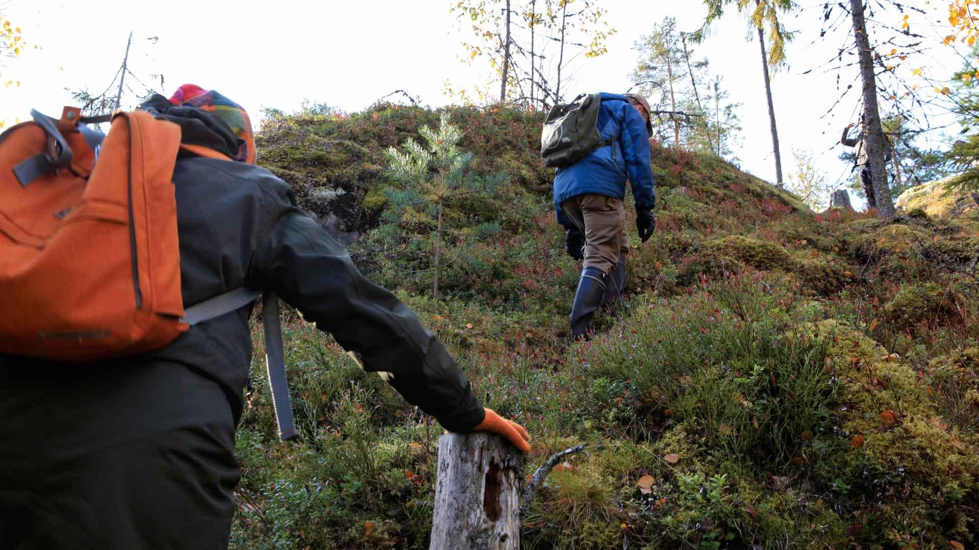 Kuhilaat tarpovat metsää reippain askelin.