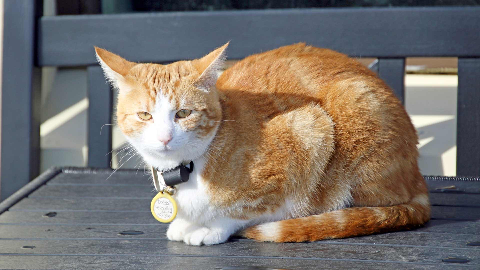Reykjavikilaiset rakastavat kissoja, jotka kulkevat kaupungin kaduilla.