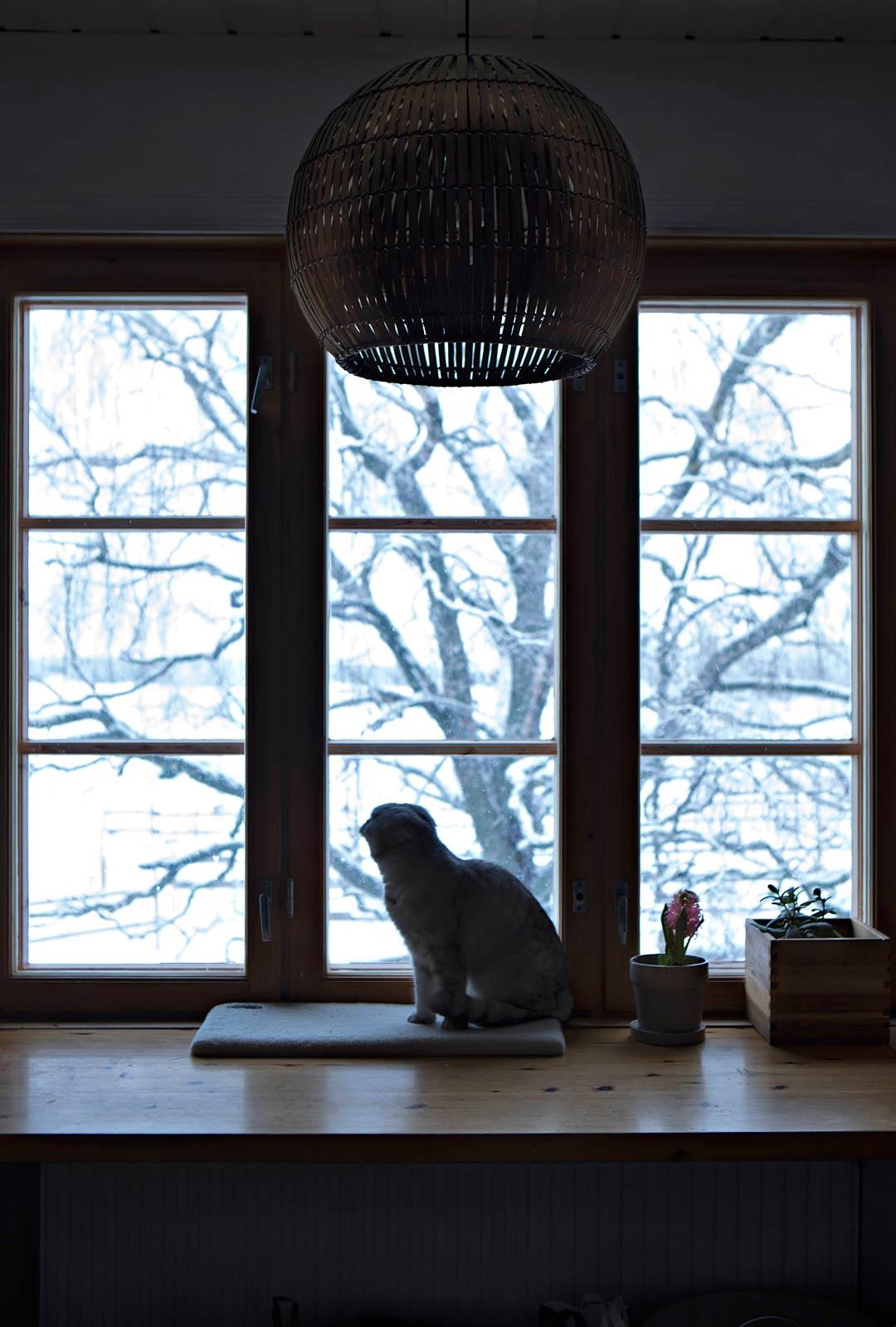 Irene seuraa hevosten käyskentelyä laitumella keittiön ikkunasta.