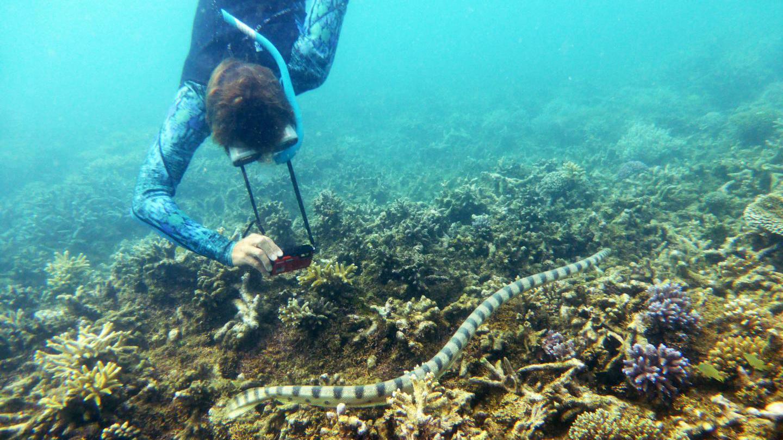 Merikäärme tuli tutuksi snorklaaville mummoille.