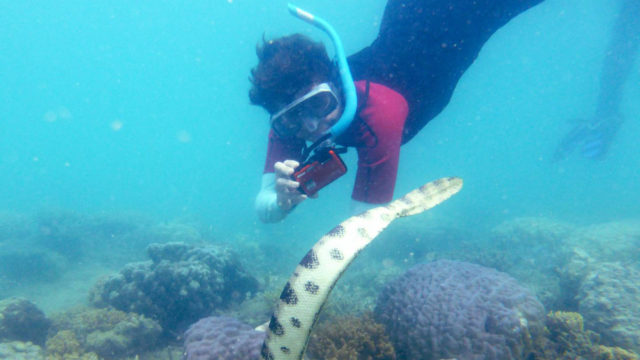 Snorklaavat mummot paljastivat, että myrkyllinen merikäärme ei ollutkaan niin harvinainen kuin oli luultu.