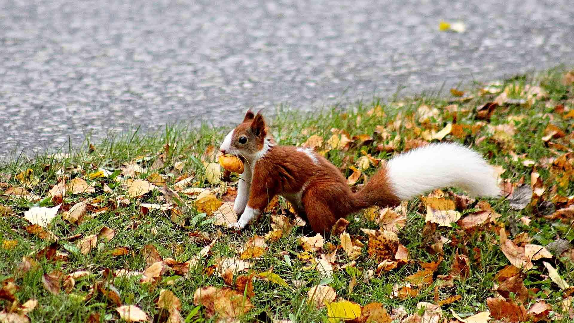 Tornion kirjavat oravat