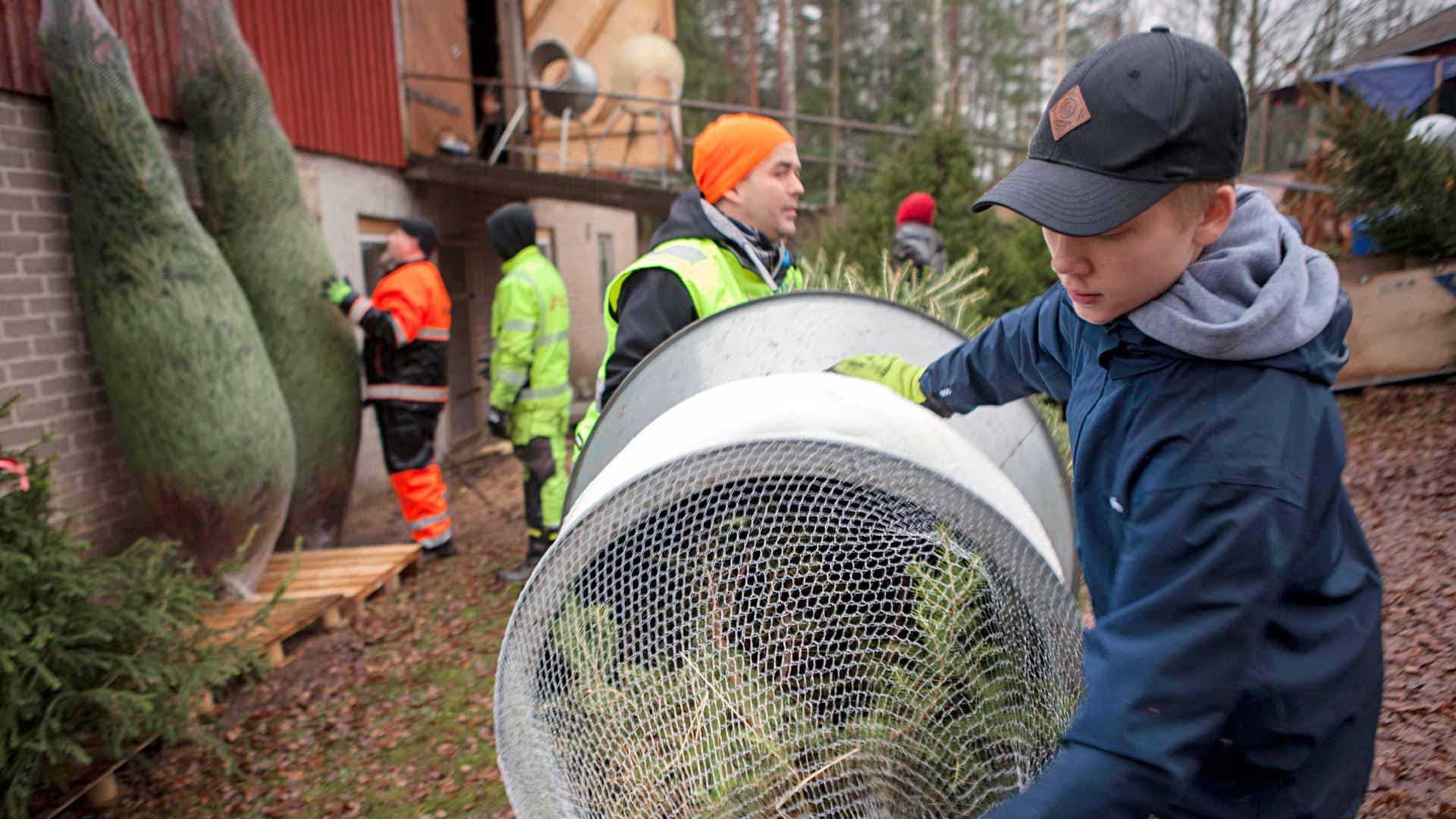 Pakkauslaitteella kuusen pussittaminen sujuu nopeasti. Tom Lindholm työntää ja Ilkka Leppänen ottaa vastaan. 15-vuotias Leppänen on talkooporukan nuorin.