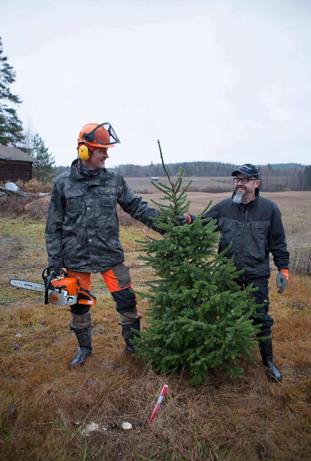 """Vesa Karvonen (vas.) ja Ilari Örnberg ovat lapsuudenystäviä. Nyt he jakavat myös kuusihommat. """"Myyn kuusia kolmessa eri paikassa. En pystyisi siihen yksin"""", Karvonen sanoo."""
