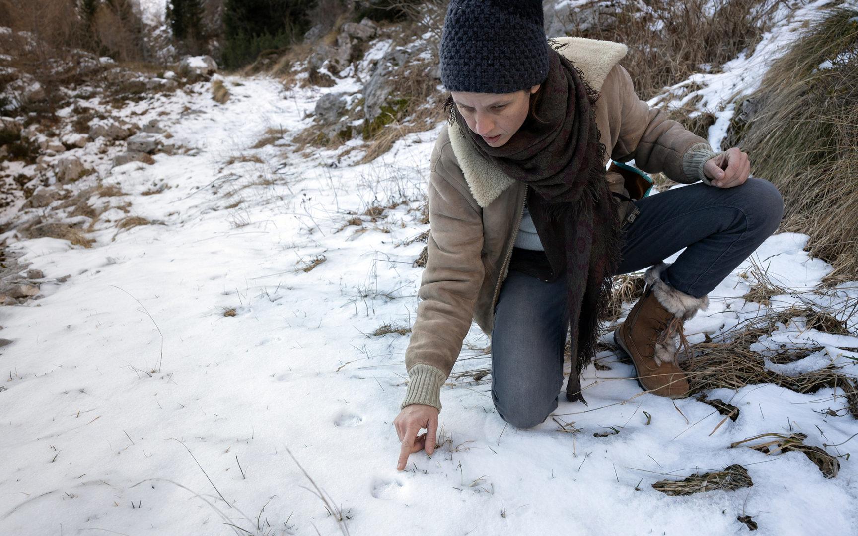 Lumijälkiä etsitään vapaaehtoisvoimin.