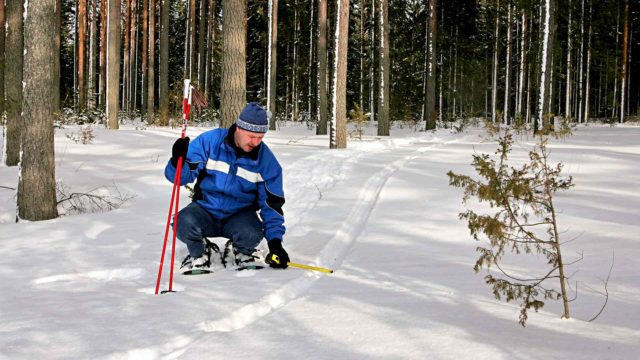Talvisiin lumijälkilaskentoihin osallistuu 3000–5000 vapaaehtoista laskijaa.