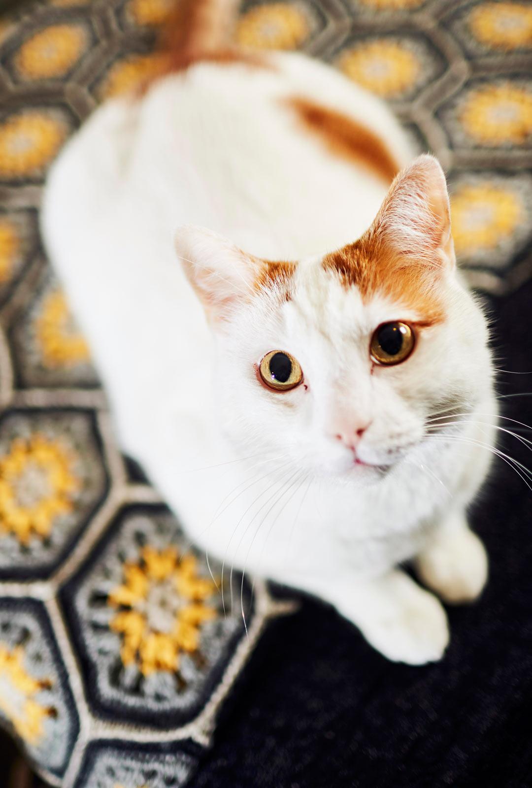 Joose-kissa tuo Mirjalle paljon iloa.