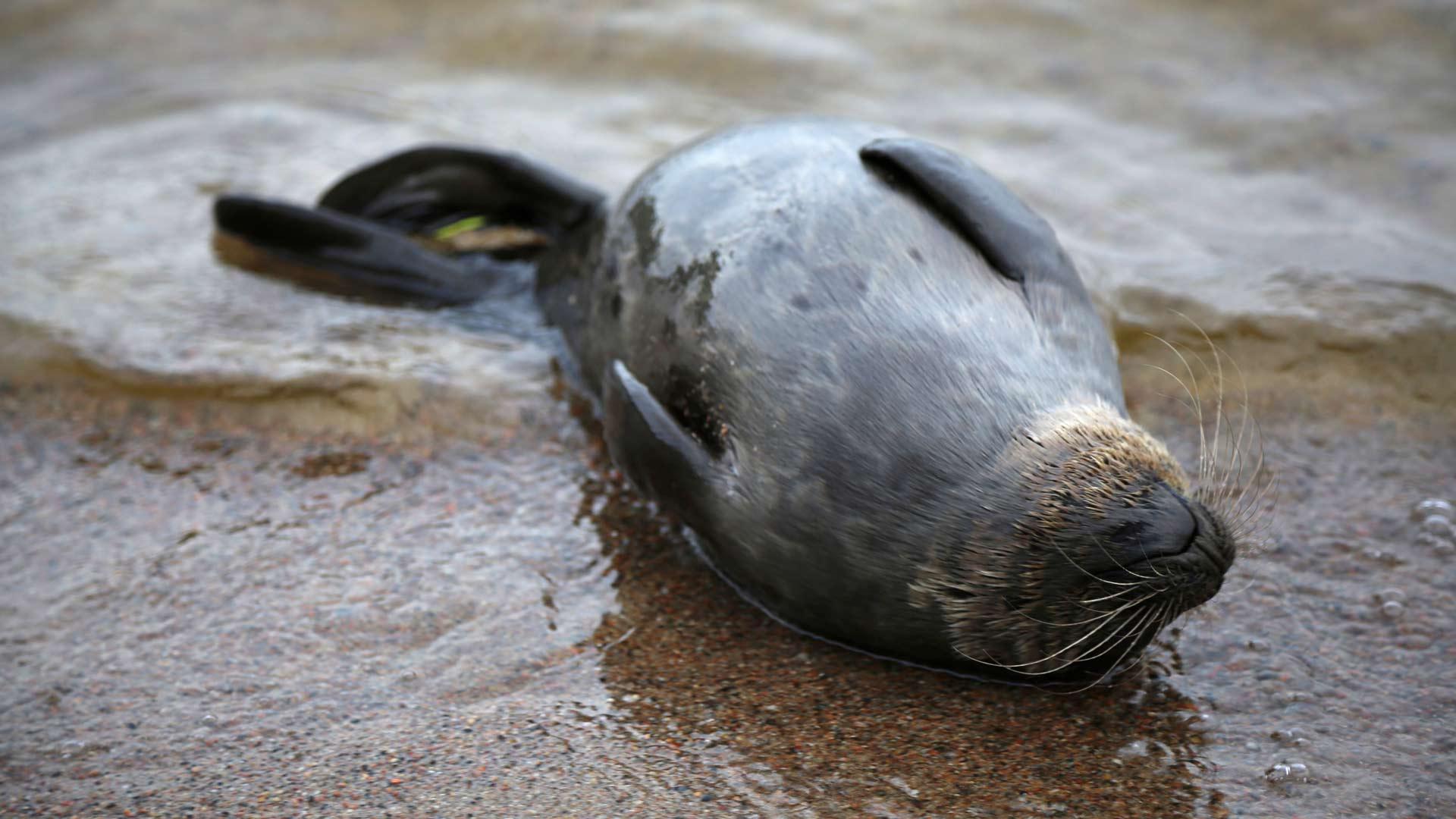Sanelma tapasi nukkua rantavedessä selällään, pää mökin ja pyrstö järven suuntaan, ja heräsi, kun Pekka Sarkanen huuteli sille.