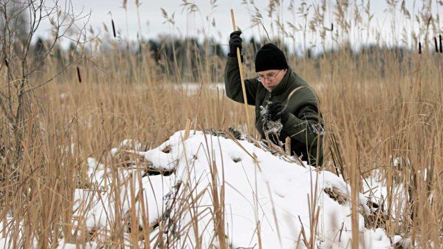 """""""Piisamit ovat sopeutuneet lumeen, jäähän ja pakkaseen"""", sanoo Veli-Matti Väänänen."""