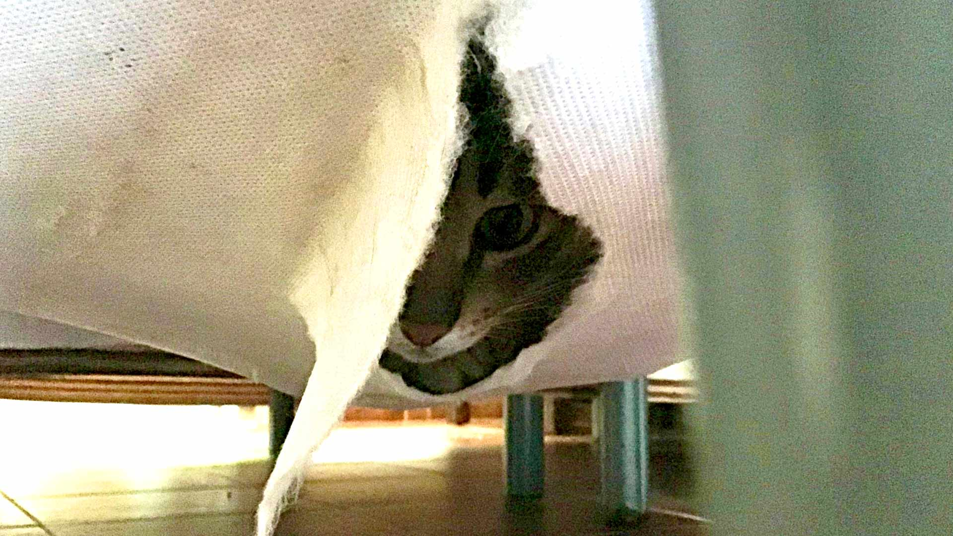 Kissa löytyi piilosta hotellisängyn runkopatjan sisältä.