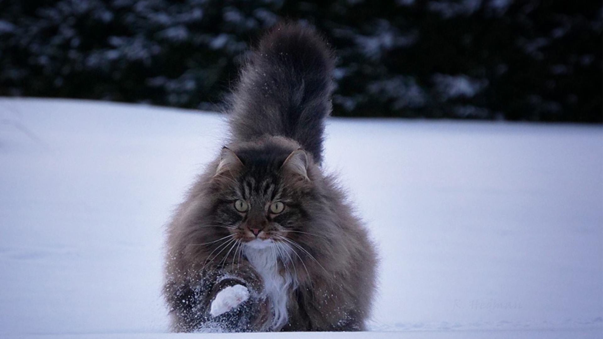 Sämpy-kissa on some-julkkis