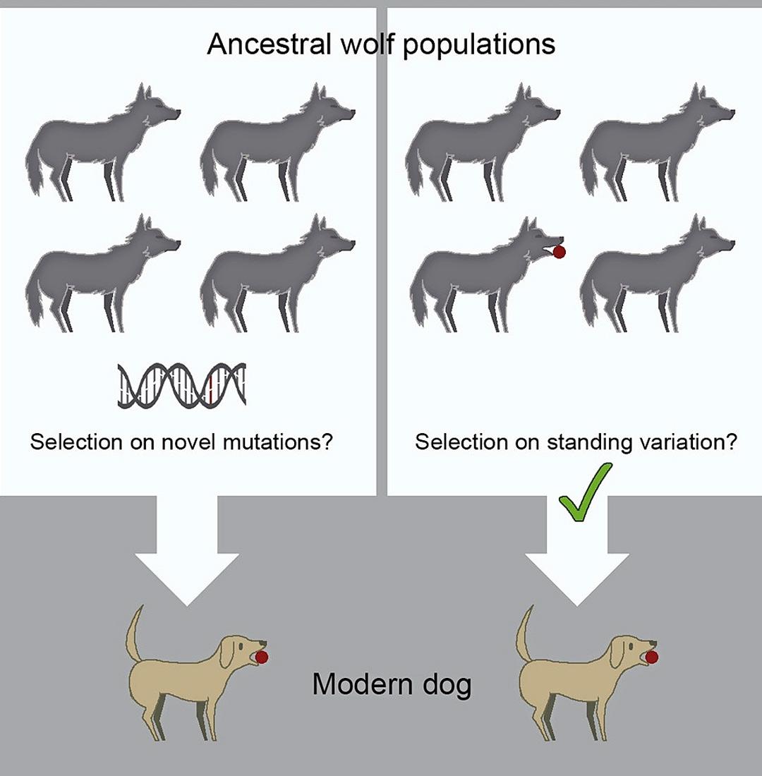 Sudenpentu ja koira