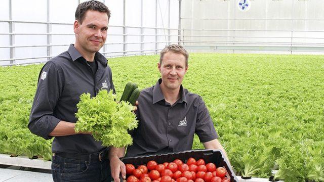 Hortiherttuan viljelijät Toni Tanner (vas) ja Jani Lindman tuottavat kotimaisia kasviksia ympäri vuoden.