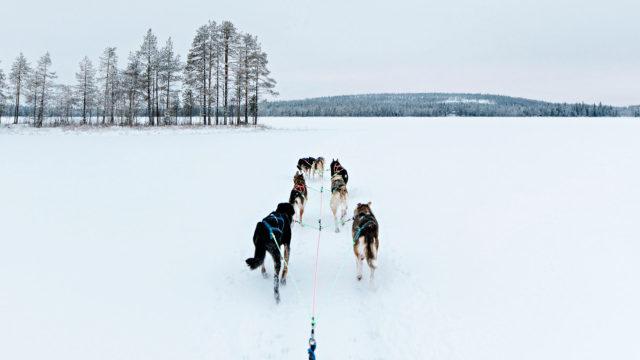 Arktisella kaupunkilomalla aloittelijakin oppii ohjastamaan koiravaljakkoa.