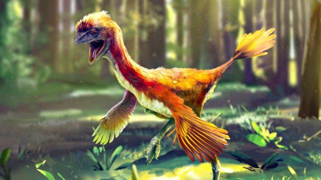 Dokkarissa Evoluution ihmeet havainnollistetaan, kuinka linnut ovat kehittyneet suoraan dinosauruksista.