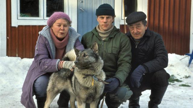Aikanaan supersuositussa Metsolat-sarjassa näyttelivät muun muassa Helinä Viitanen-Haljala (Annikki Metsola), Kari Hakala (Erkki Metsola) ja Ahti Haljala (Antti Metsola). Katsojille tuli tutuksi myös Roni-koira.