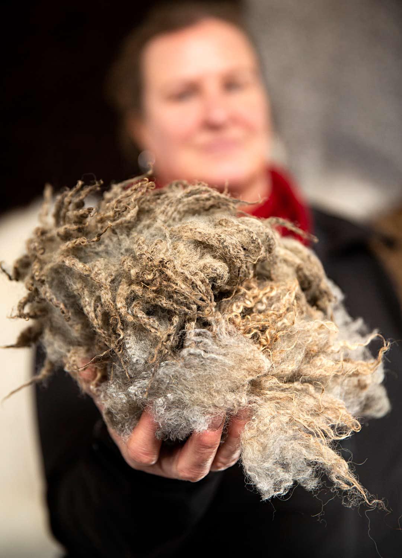 Kujansuun lampaiden villa keritään kahdesti vuodessa. Samalla lampailta aina vuollaan sorkat.