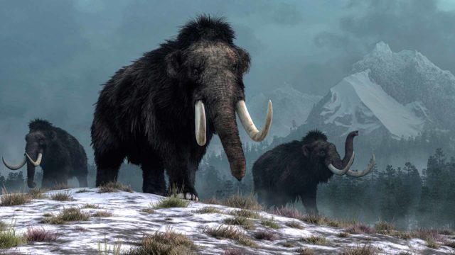 Tutkijat odottivat löytävänsä merkkejä siirtymästä maanviljelyskulttuuriin. Kuvassa mammutteja.