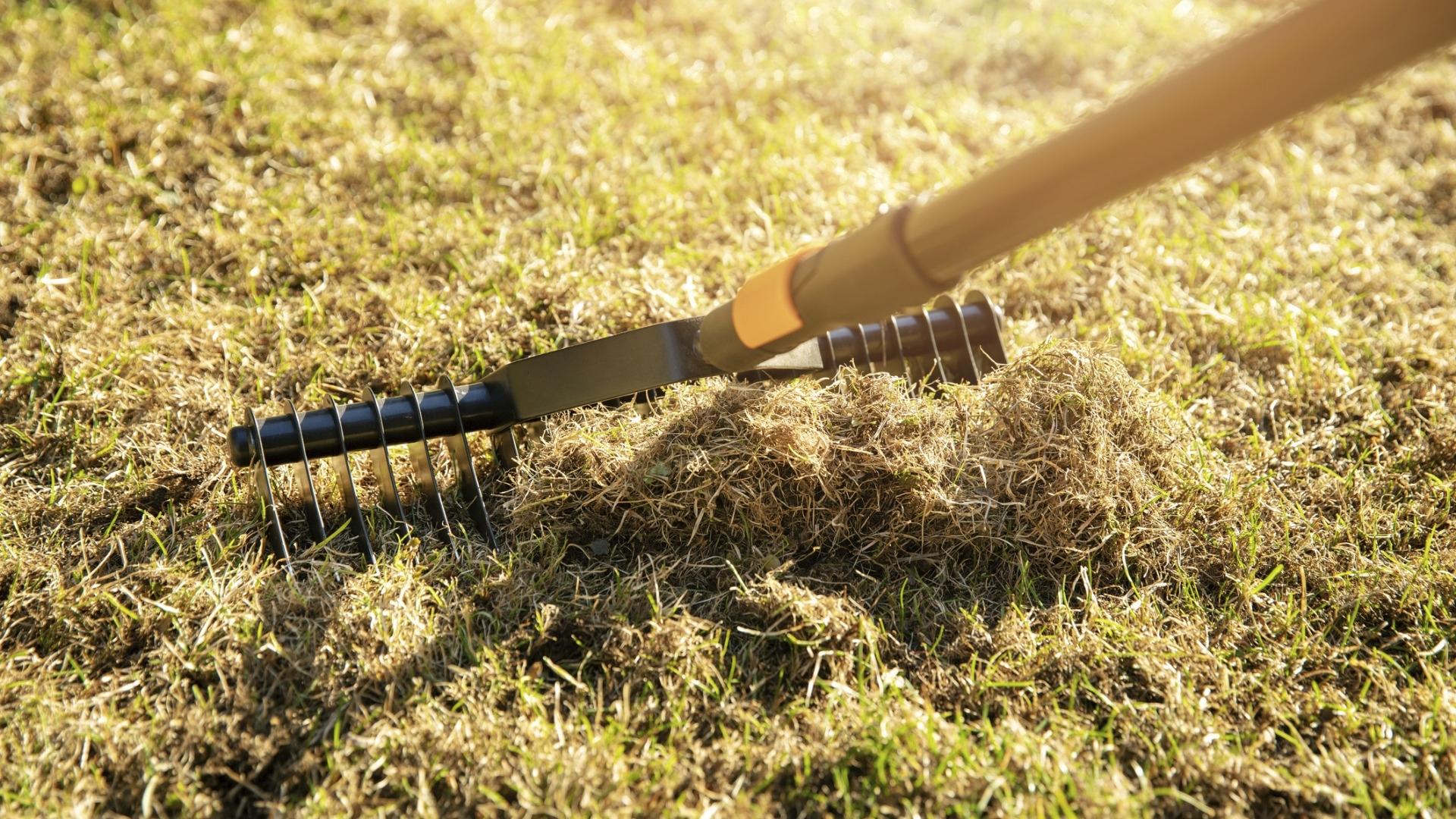 Nurmikon leikkuujäte kannattaa siivota kompostiin. Turhan tarkka ei tarvitse olla, vaan korsia saa jäädä nurmikolle hiukan maatumaankin.