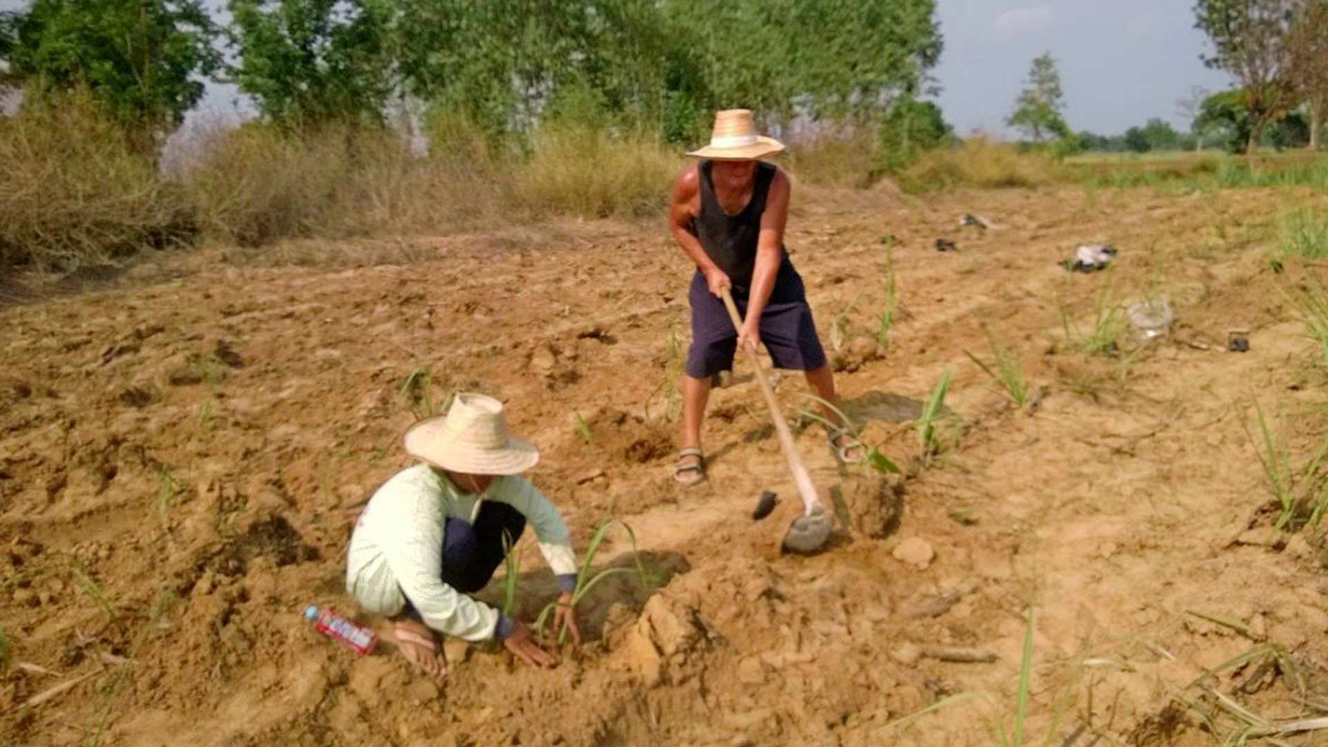 Paulin arkea Thaimaassa: sokeriruo'on viljelyä ja kauppareissuja anopin kanssa.